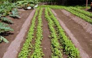 Метод Миттлайдера для картофеля: от посадки до сбора урожая