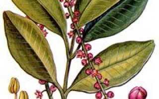 Пилокарпус яборанди — полезные свойства, описание