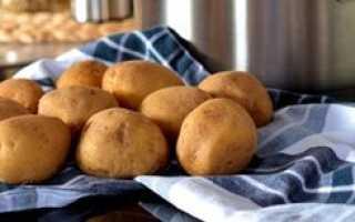 Картофель для собак – особенности составления рациона питомца