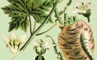 Адамов корень — полезные свойства, описание