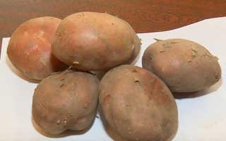Сорт картофеля «Утро раннее» – описание и фото
