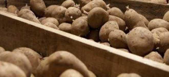 Как правильно оборудовать подвал или погреб для картофеля
