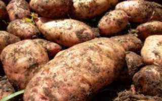 Препарат Фюзилад для картофеля: инструкция и дозировка