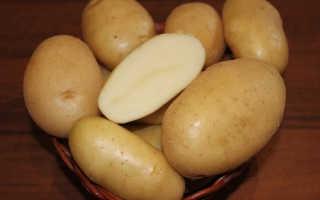 Сорт картофеля «Крепыш» – описание и фото