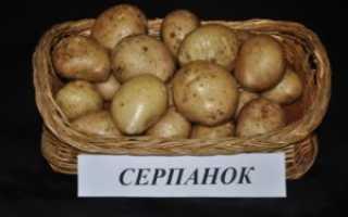 Сорт картофеля «Серпанок» – описание и фото