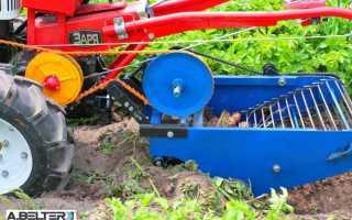Способы уборки картофеля: виды мотоблоков и картофелекопалок