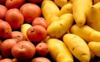 Сорт картофеля «Ладожский» – описание и фото