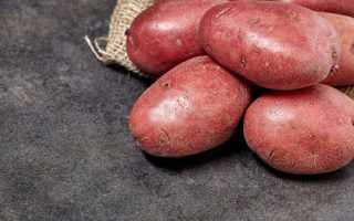 Красные сорта картофеля: названия, преимущества и недостатки